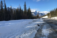 Asphalt paving job in Banff National Park near Mistaya Canyon